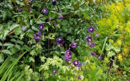 Maplewood May flowers. Photo by Jennifer Willis.