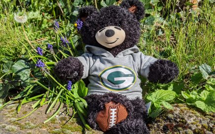 Football teddy bear in a Green Bear Packers hoodie, sitting in the sunshine with rocks and flowers.