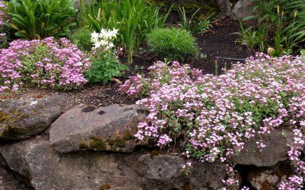 Neighborhood flower garden bed in SW Portland, Oregon. Photo by Jennifer Willis.