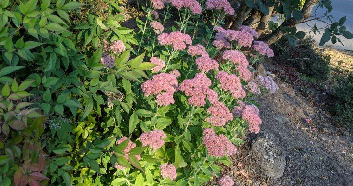 September flowers. Portland, Oregon. (Jennifer Willis)